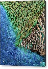 Feathers #1 Acrylic Print