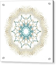 Acrylic Print featuring the digital art Feathers And Catkins Kaleidoscope Design by Mary Machare