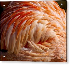 Feathers Of Pink Acrylic Print