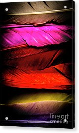 Feathers Of Rainbow Color Acrylic Print