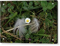 Acrylic Print featuring the photograph Feathers On The Lawn #2 by Ben Upham III