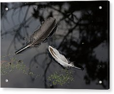 On The Surface Acrylic Print by Marilyn Wilson