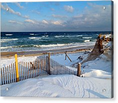February Delight Acrylic Print by Dianne Cowen