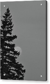 February Morning Moon Acrylic Print by Maria Suhr