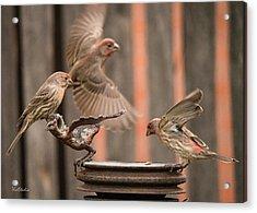 Feeding Finches Acrylic Print