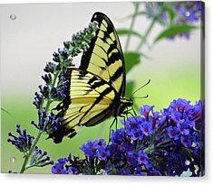 Feeding From A Nectar Plant Acrylic Print