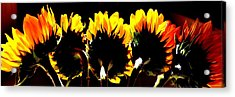 Soaking Up Sun Acrylic Print