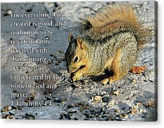 Feeding Squirrel 1timothy 4 V 4 Acrylic Print by Linda Phelps