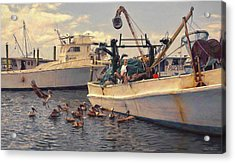 Feeding The Pelicans Acrylic Print by Glenn Gemmell