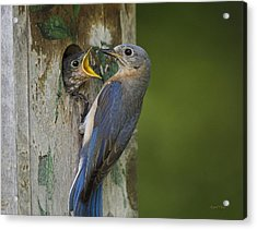 Acrylic Print featuring the photograph Feeding Time by Angel Cher