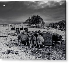 Acrylic Print featuring the photograph Feeding Time by Keith Elliott