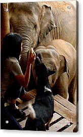 Acrylic Print featuring the photograph Feeding Time by Louise Fahy