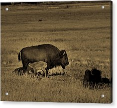 Feeding Time On The Prairie Acrylic Print by TL Mair
