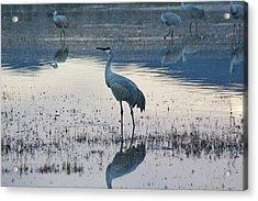 Feeling Blue Acrylic Print