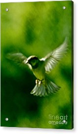Feeling Free As A Bird Wall Art Print Acrylic Print