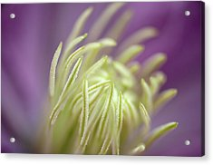 Feeling Acrylic Print by Mark Denham
