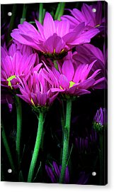 Feeling Pink Acrylic Print by Edgar Laureano