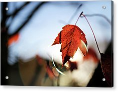 Acrylic Print featuring the photograph Feels Like Fall by Lora Lee Chapman