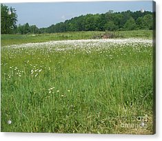 Feild Of White Acrylic Print by Sacred  Muse