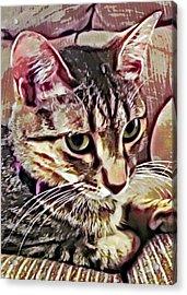 Feline Fancy Acrylic Print by David G Paul