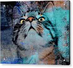 Feline Focus Acrylic Print by Kathy M Krause