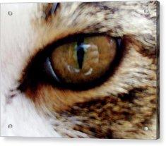 Feline Frenzy Acrylic Print by Ali Dover
