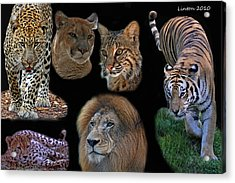 Feline Montage Acrylic Print by Larry Linton