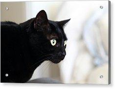 Feline On The Prowl Acrylic Print by Enzie Shahmiri
