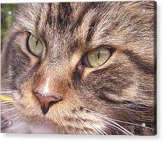 Feline Perfection Acrylic Print by Joanne Simpson