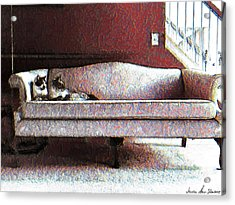 Acrylic Print featuring the photograph Felines Be Like... by Iowan Stone-Flowers
