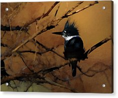 Acrylic Print featuring the digital art Female Belted Kingfisher 2 by Ernie Echols