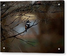 Acrylic Print featuring the digital art Female Belted Kingfisher 3 by Ernie Echols