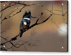 Acrylic Print featuring the digital art Female Belted Kingfisher by Ernie Echols