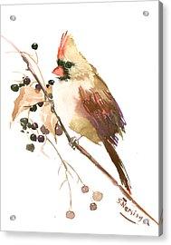 Female Cardinal Bird Acrylic Print