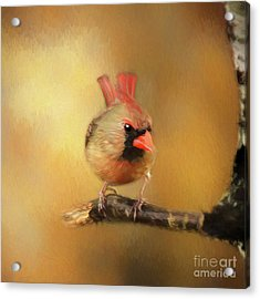 Acrylic Print featuring the photograph Female Cardinal Excited For Spring by Darren Fisher