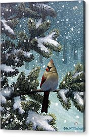 Female Cardinal Acrylic Print by Mark Mittlesteadt