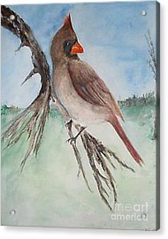 Acrylic Print featuring the painting Female Cardinal by Sibby S
