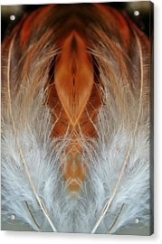 Female Feathers Acrylic Print