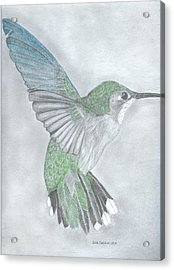 Rufous hummingbird drawing - photo#53