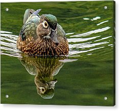Acrylic Print featuring the photograph Female Wood Duck by Jean Noren