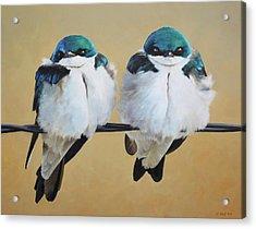 Fence Line Swallows Acrylic Print