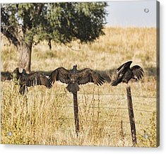 Acrylic Print featuring the photograph Fence Post Vultures by Bill Kesler