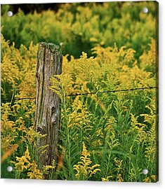 Fence Post7139 Acrylic Print