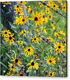 Fence Row Flowers Acrylic Print by Pete Hellmann