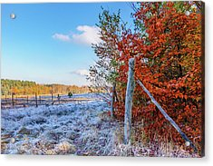 Acrylic Print featuring the photograph Fenced Autumn by Dmytro Korol