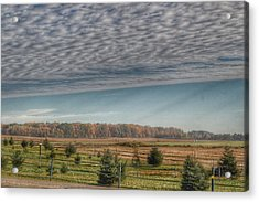 9017 - Fences, Firs And Fall Acrylic Print