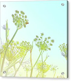 Acrylic Print featuring the photograph Fennel As High As An Elephant's Eye by Cindy Garber Iverson