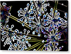 Fennel Inflorescence In Neon 2 Acrylic Print