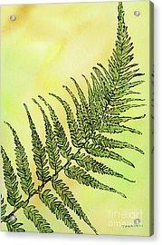 Fern 1 Acrylic Print