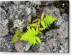 Fern And Lichen Acrylic Print